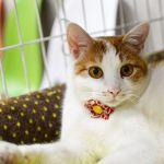 猫好き必見!新スタイルの猫カフェ【ネコリパ】で楽しく猫を幸せに♡のサムネイル画像