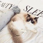 猫好き共感!猫好きライターが選ぶ【猫のかわいいところ♡】5選のサムネイル画像