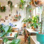 大人気!ぱっと華やぐ【観葉植物】をプラスして素敵な部屋づくりを♡のサムネイル画像