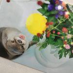 大人気!プニプニおててが可愛すぎる♡【コツメカワウソ】特集!のサムネイル画像