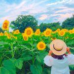 今すぐにでも行きたい♡フォトジェスポット【関東のひまわり畑3選】のサムネイル画像