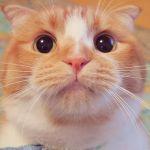 にゃん好き必見ニュース!【ねこのおみあし】猫のパーツ写真集発売♡のサムネイル画像